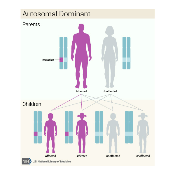 An autosomal dominant condition only requires one copy of a faulty gene for the condition to be present.
