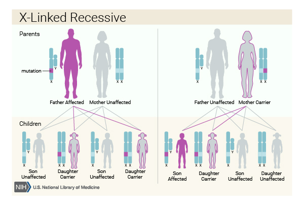 X linked conditions are passed down on the X chromosome, therefore affecting males and females differently.
